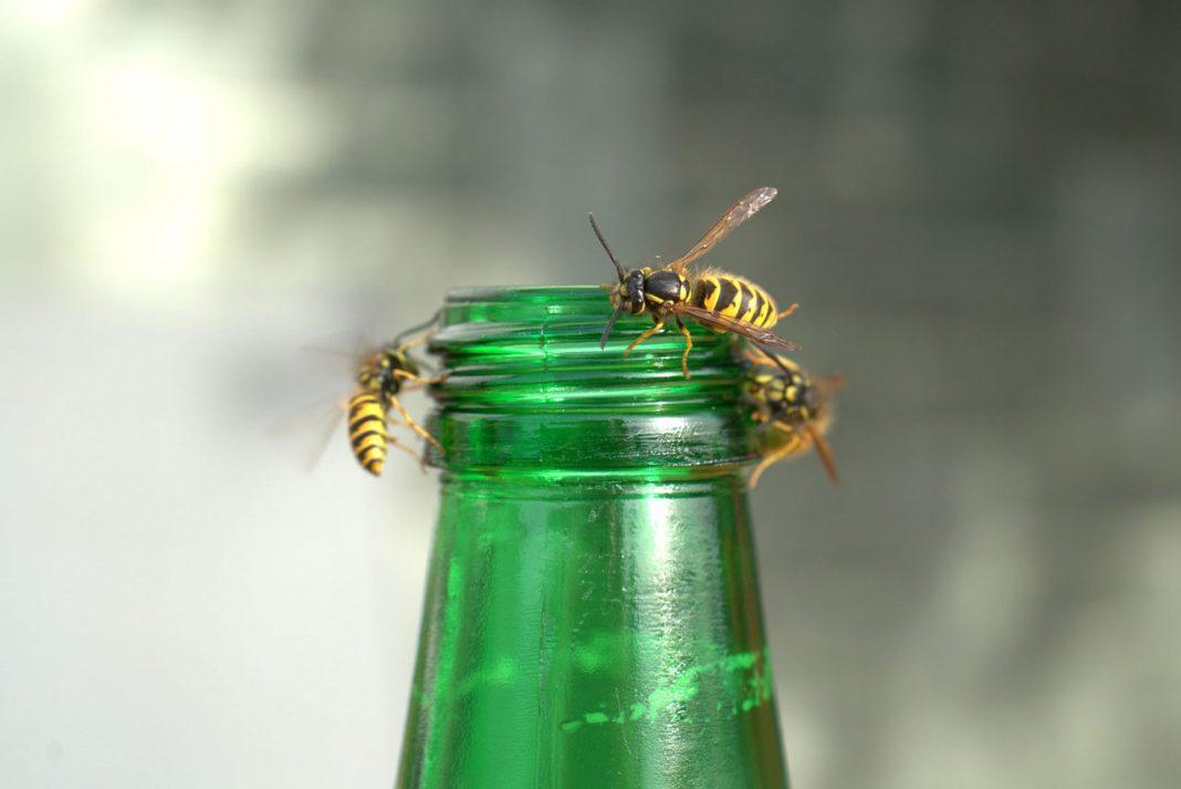 Symbolbild Insektengitallergie: Bienen auf einer grünen Flasche