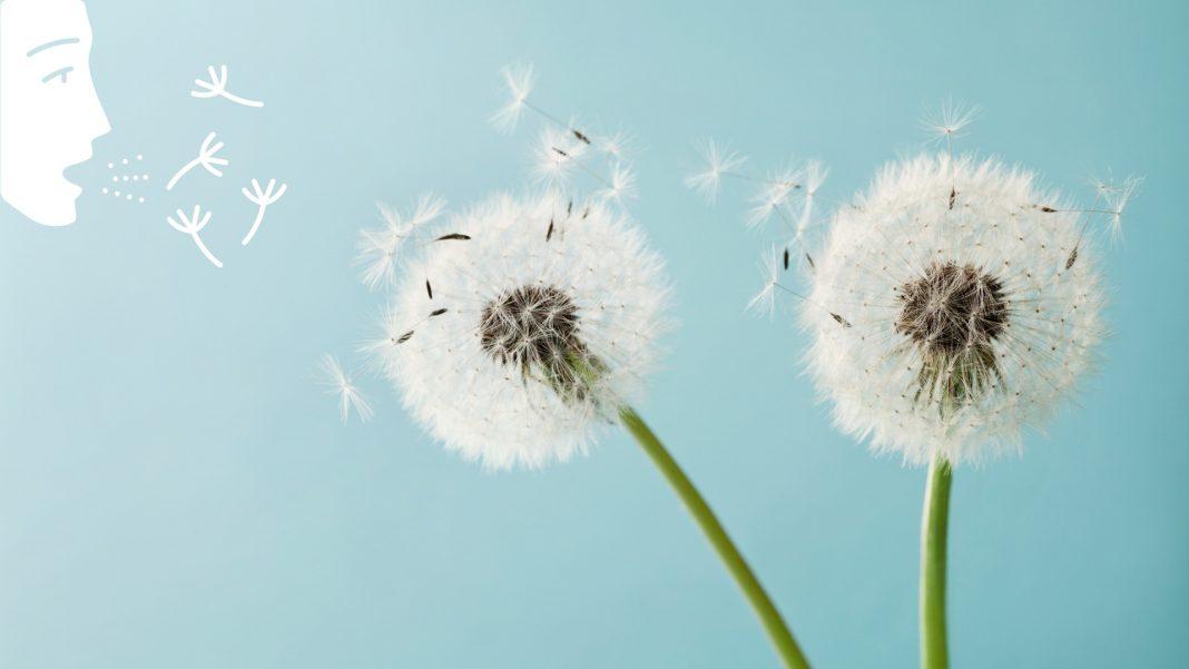 Symbolbild Pollenallergie: niesende frau und Blütenpollen, Credit: Canva